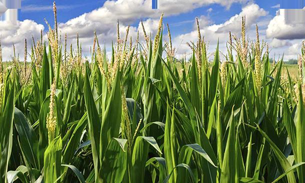 Iowa Corn Indy 300